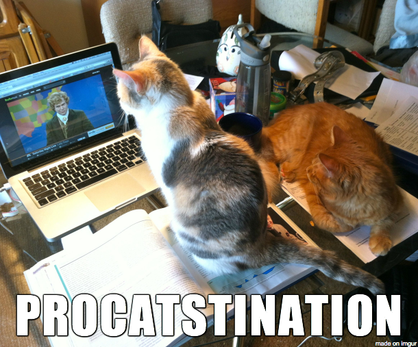 my-cats-are-procrastination-enablers-64580